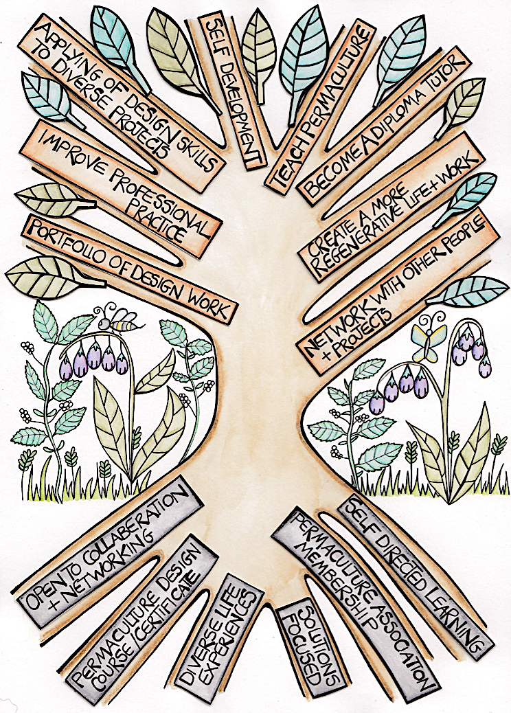 Diploma Tree Infographic