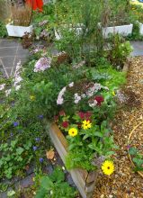 Herb and flower bed